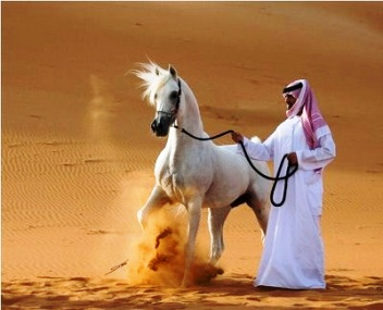 bedouin-and-horse